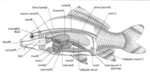 Mengenal Anatomi Pada Beberapa Hewan